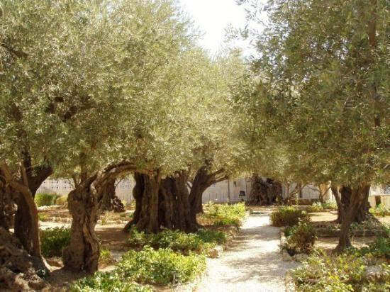 Экономный паломнический тур в Израиль Паломническая поездка
